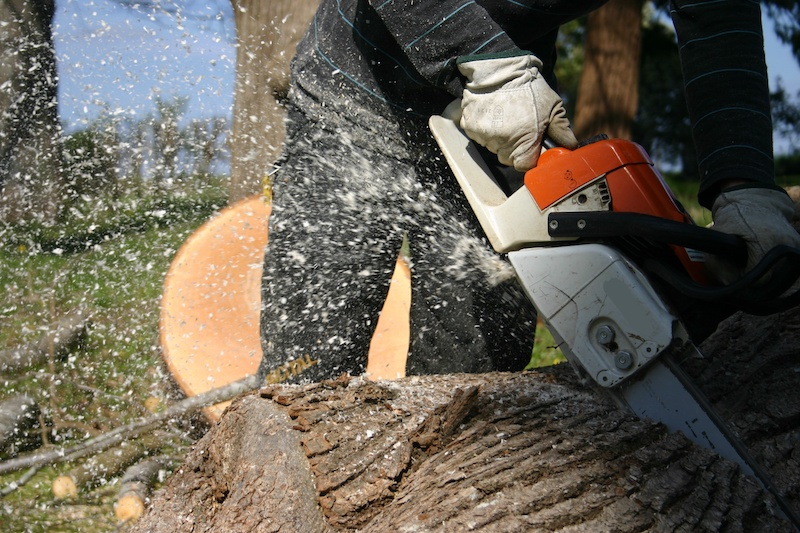 Dutch Elm Disease and Tree Removal
