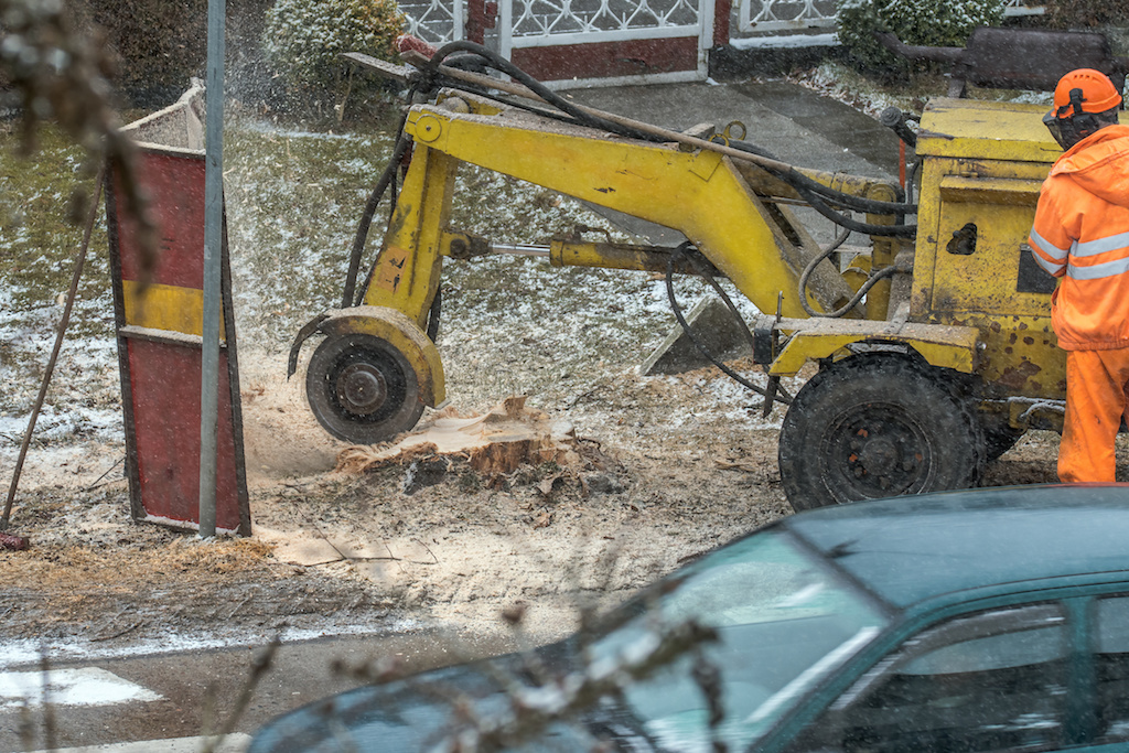 The Stump Grinding Process Finally Explained