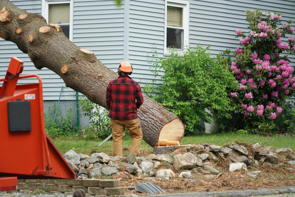 Why Is Tree Removal Necessary?